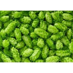 Hopbloemen Brewers Gold 2018 100g
