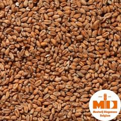 Dingemans Mroost Wheat Tarwemout MD Mout 1 KG
