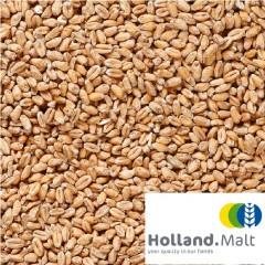 Holland Malt Tarwe mout 25 KG